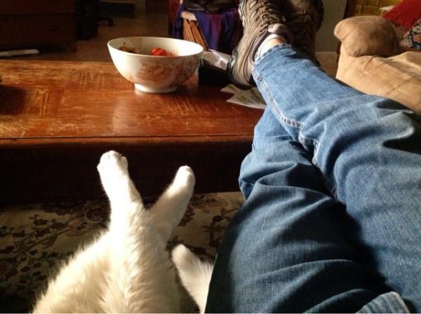 猫のストレスを解消するためにしてあげられる7つの事
