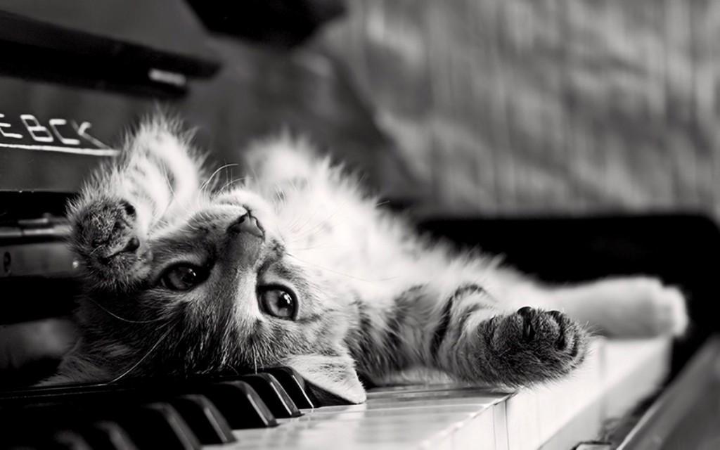 タイトル:休日は愛猫とごろごろしたい、グータラ猫の写真11選