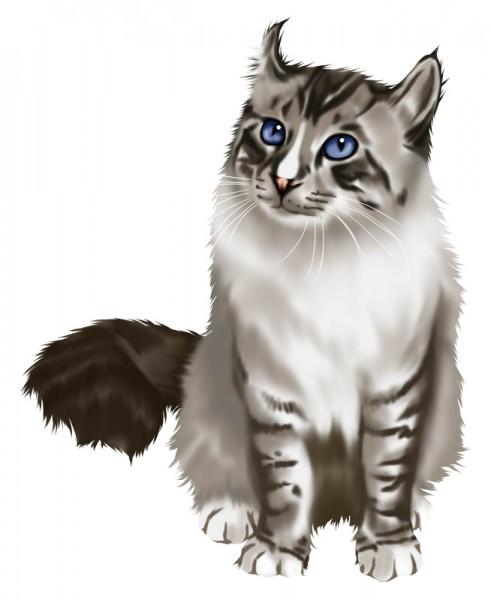 アメリカンカールが猫マニアに愛される7つの理由