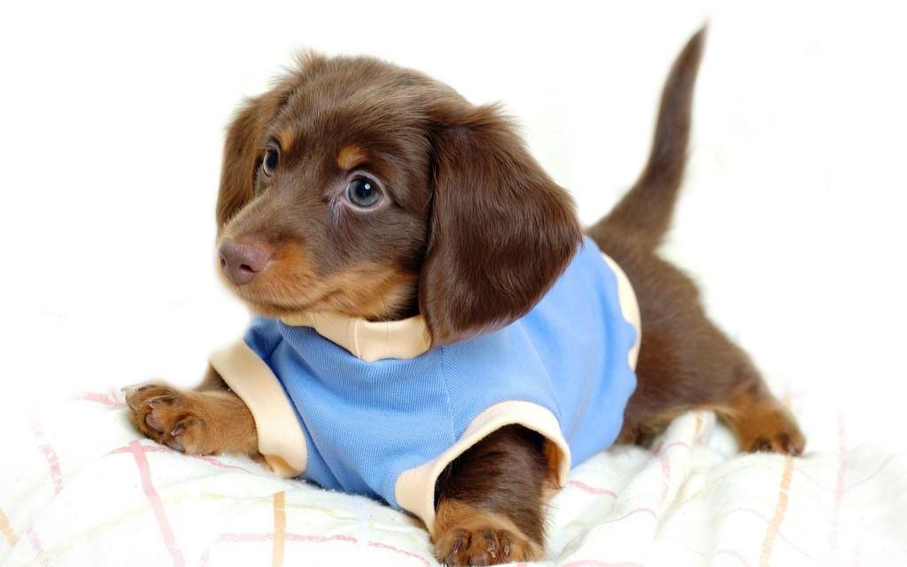犬の服を激安価格で作るための7つの賢い方法