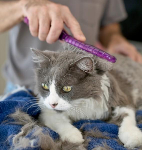 猫毛をきれいに保つために知っておきたい7つのブラッシング