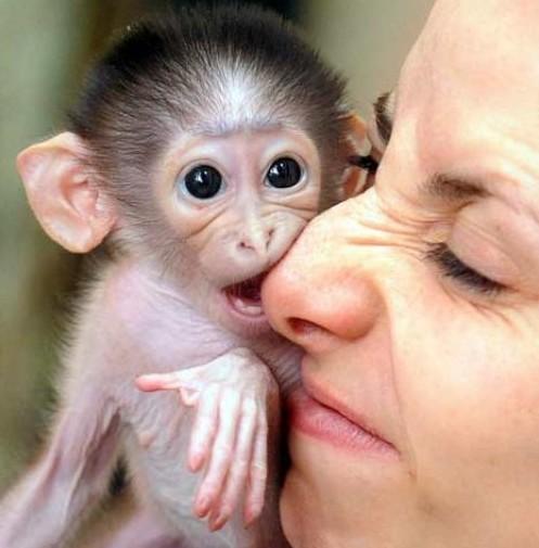 猿をペットにしたい人が最低限クリアすべき7つの条件
