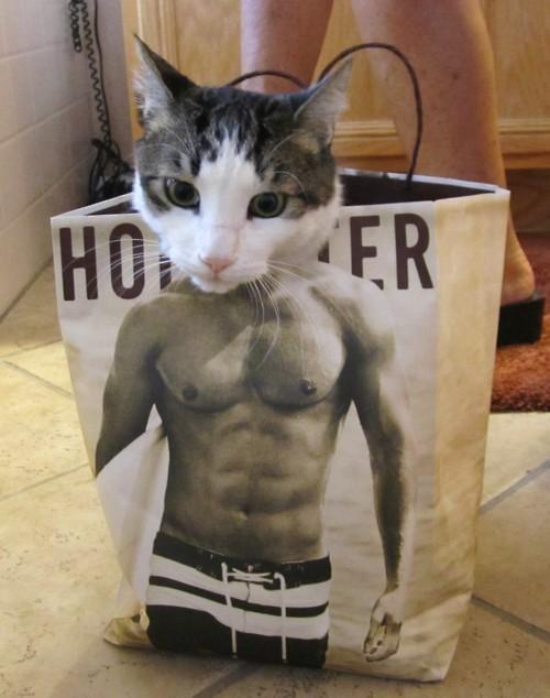 思わず吹き出しちゃう面白い猫の画像15連発☆