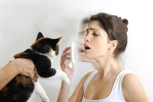 猫アレルギーを克服するために知っておきたい7つの事