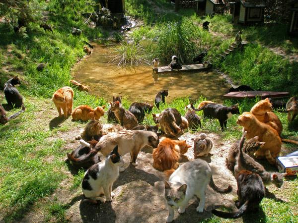 猫の集会で何が行われているのかを7つの視点で徹底解剖!