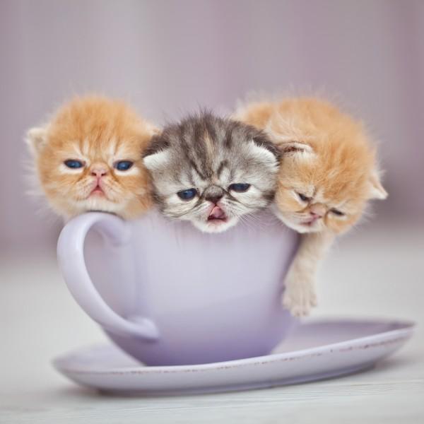 猫カフェに行くなら横浜をお薦めしたい7つの理由