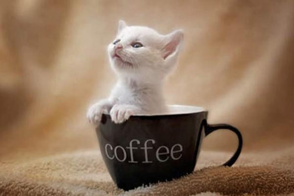 猫カフェは池袋がアツい★厳選11店舗