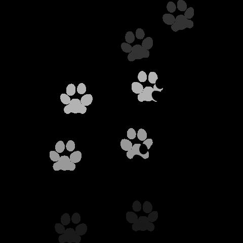 猫の肉球で癒されたい★ネコ画像11連発!