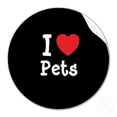 一人暮らしでペットを飼うときにお薦めしたい7種の動物