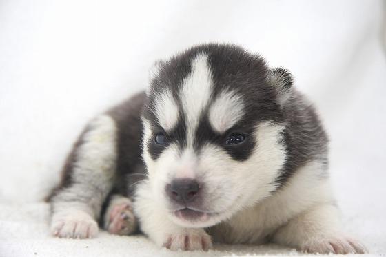 子犬の飼い方で知っておきたい7つの注意点