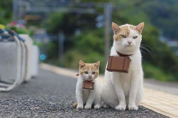 猫好きにはたまらない、猫のおもしろ&癒し画像11連発