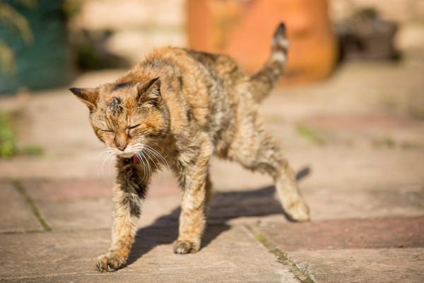 猫の寿命を知って愛猫と上手に接する7つの方法