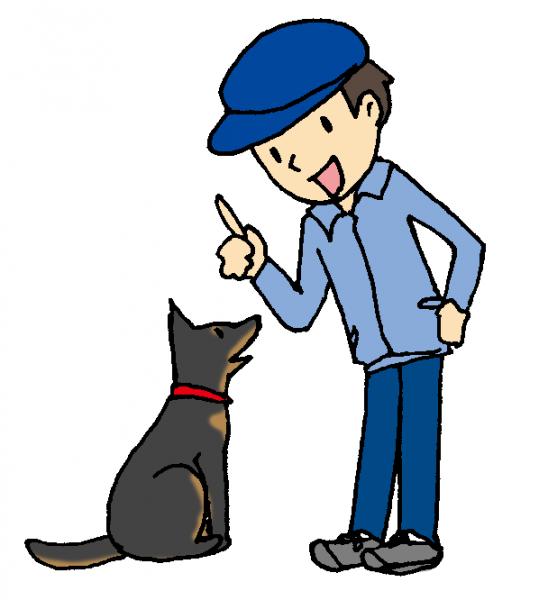 犬のしつけ方で困っているひと必見!賢い犬の7つの育て方