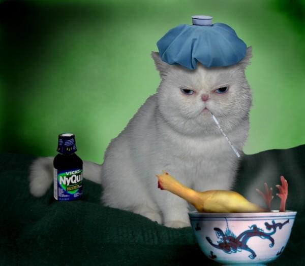 猫が病気にかかりやすい7つの飼育環境を徹底解剖