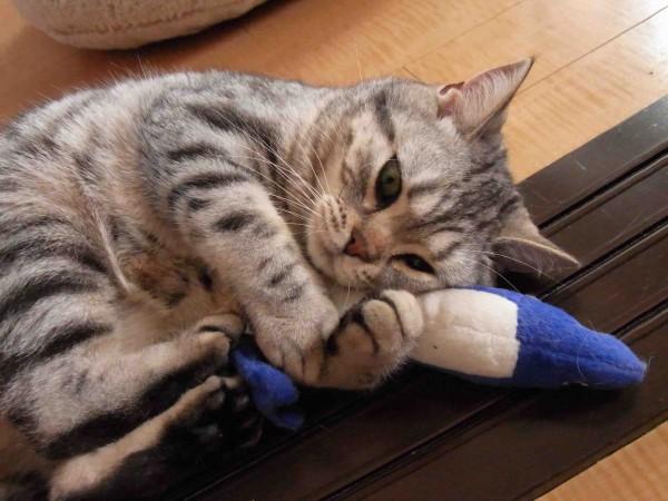 絶対に猫がはまるおもちゃを11個の画像で大公開
