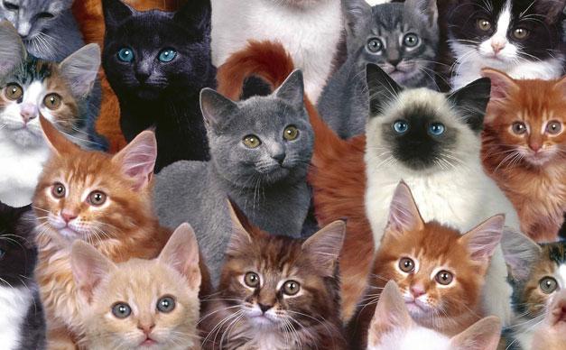 本当にあった。猫が集会をしている7つの秘密ポイント