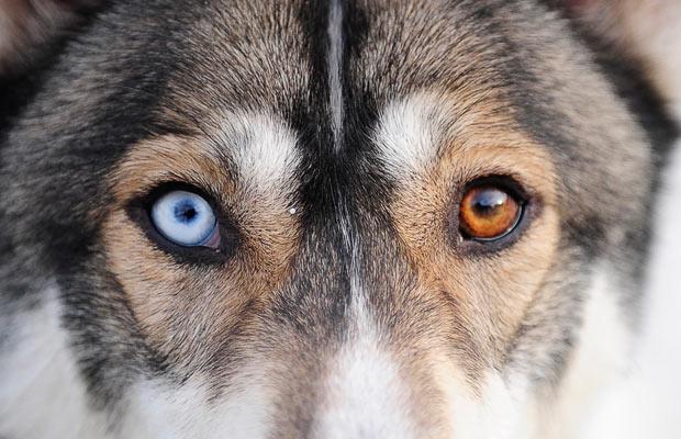 犬や猫のオッドアイが発生する7つの理由とは?