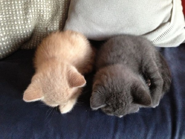 二匹の猫の後頭部