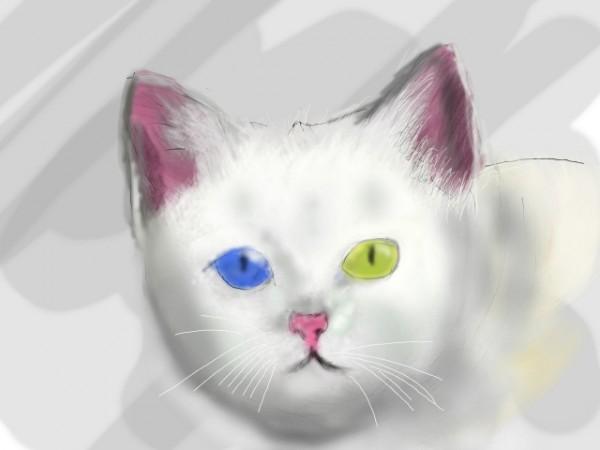 猫のオッドアイが好きな人のための11つの画像