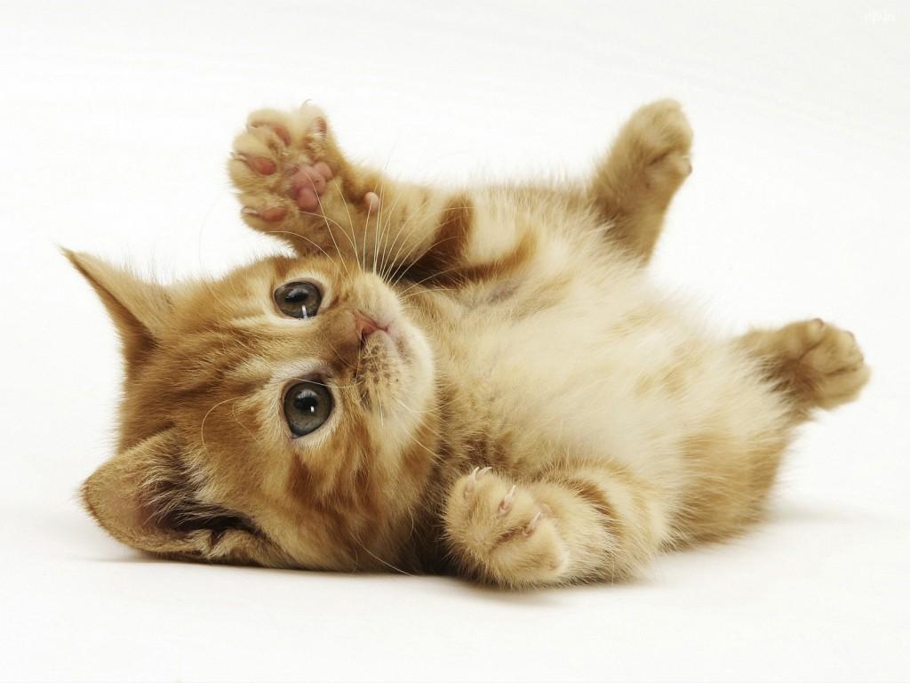 間違った子猫の飼い方で、悲劇を起こさない為に知ってほしい事