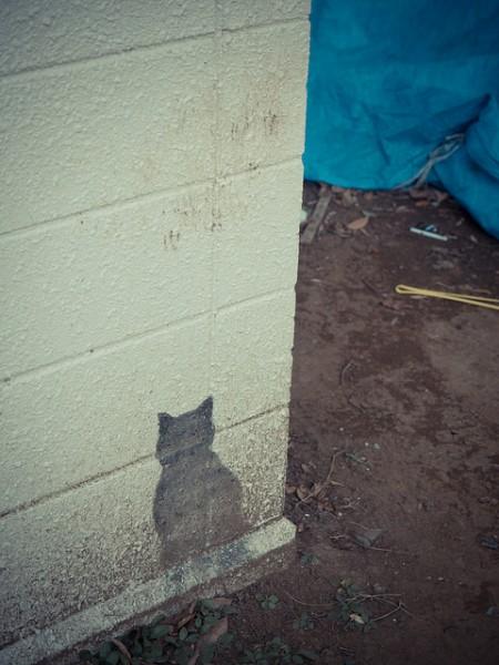 猫好きにはたまらない。猫のシルエット画像11連発