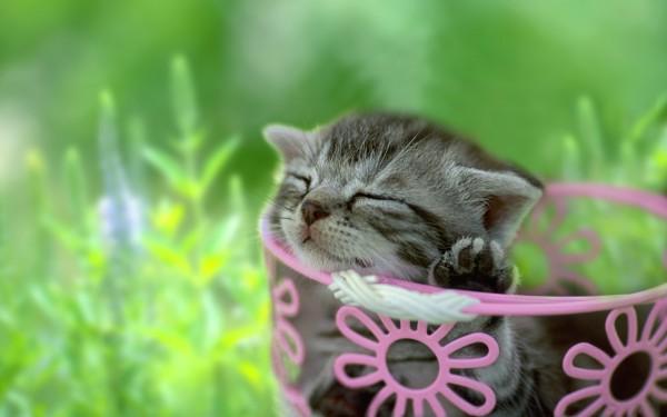 猫を赤ちゃんから飼うときに注意するべき7つのポイント