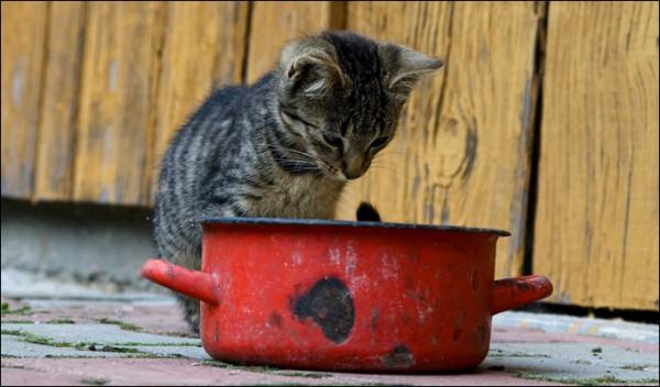 猫鍋を愛してやまない人の為に萌える猫鍋画像