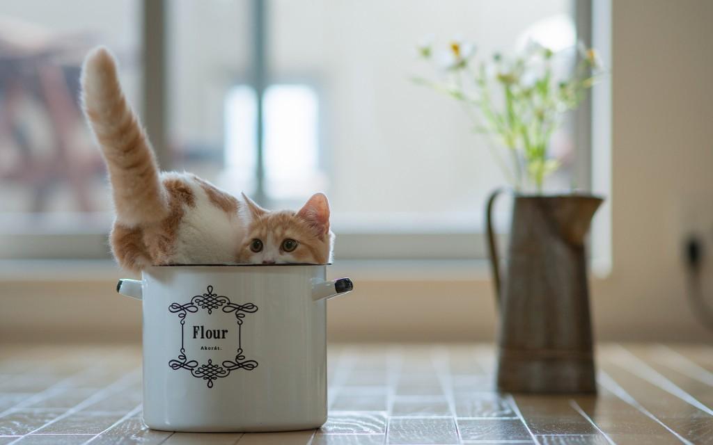 猫鍋再到来?お久しぶりの猫鍋画像11連発