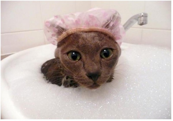 嫌がる猫のシャンプーを出来る限りストレスなく行う方法