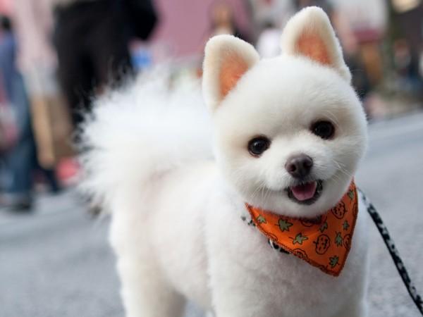 犬を飼おうとしているあなたへ。画像で分かるかわいい犬種