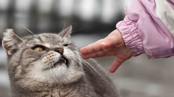 猫にはストレス?猫と人間の赤ちゃんの上手な付き合い方