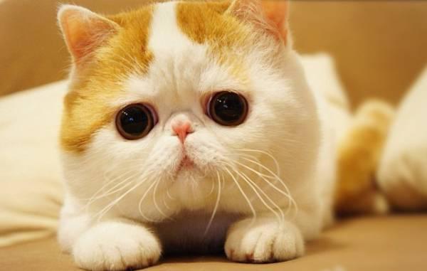 猫好きのためのマニアックなブサかわ猫画像厳選11つ