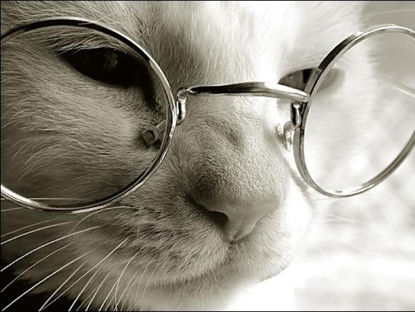 猫の平均年齢を越して長生きしてもらうための7つの心がけ