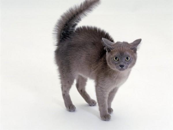 毛をボワッと逆立ててしっぽをまっすぐ立てているのは、猫が怒っているときです。むやみに刺激しないようにしましょう。