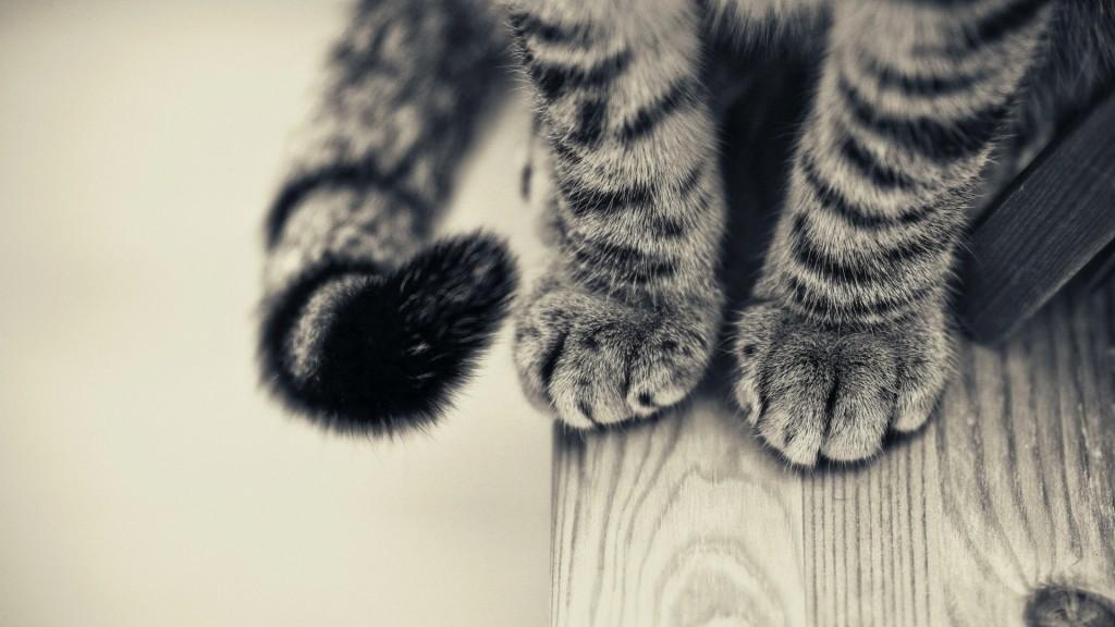 猫のしっぽから感情を理解しよう!分かりやすい画像例