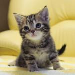 仔猫をお家に迎えよう。用意しておきたいお家のグッズ