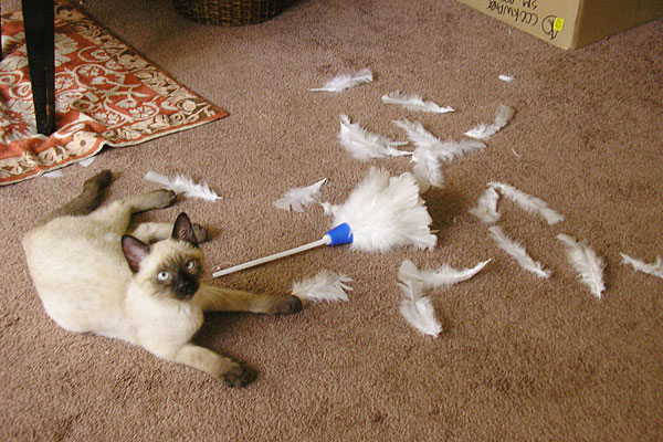 猫を飼うことの大変さを子供に伝える7つのポイント