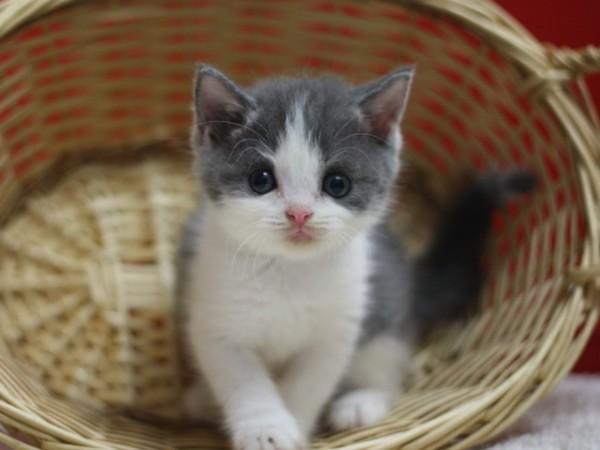 子猫が来た!はしゃぎすぎは要注意、飼い方7つのコツ☆