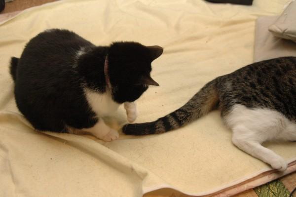 猫のしっぽが教えてくれる、あの子のキ・モ・チ★