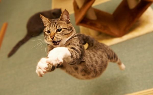 猫の動画を撮る7つのプロ級テクニック★