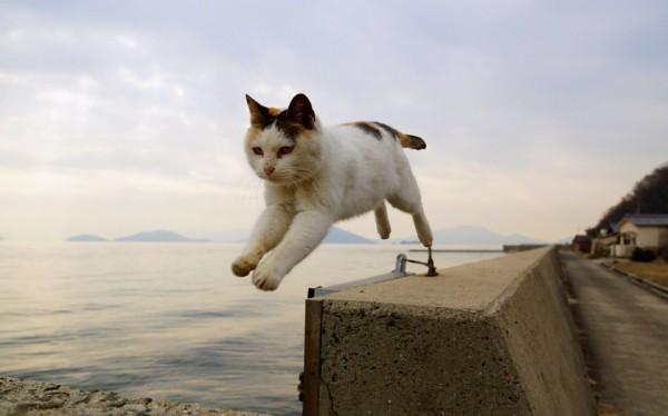 猫の動画撮影、衝撃映像を捉えやすいのはこんなポイント