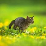 子猫の動画を撮る時に準備しておくと良い小道具と撮影法