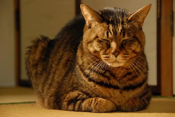 老猫の飼い方で気を付けてあげたい7つの事とは