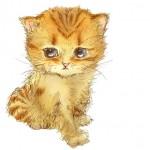 猫のイラストを描く時の7つのコツ。これであなたも猫画伯