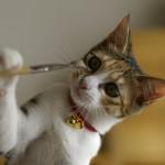 オシャレな猫の首輪をGET!キュートな首輪画像大公開