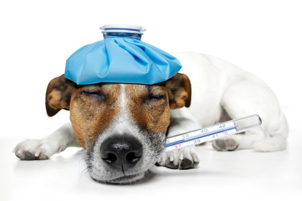 ペット保険の口コミを見て加入した人の11つの体験談
