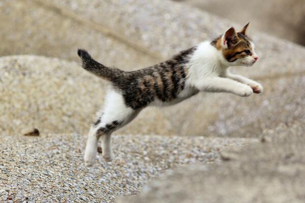 難しい子猫の動画を上手に撮る7つの方法とは
