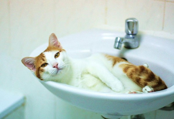 猫をシャンプーするときに気を付けてあげたい7つの事