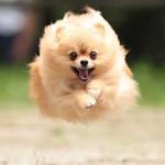 犬にしつけ教室が実はとっても必要な7つの理由