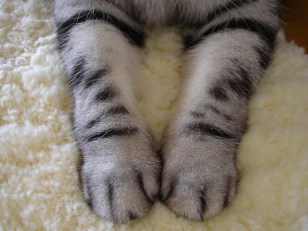 猫の手ラブ★肉球・ねこパンチ画像11選